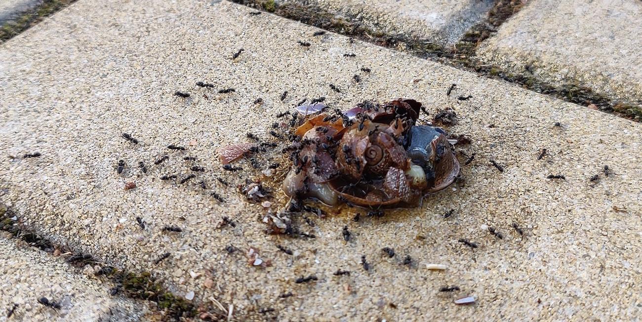 Ihmisten vai hyönteisten planeetta? Jos hyönteiset katoavat, ihminen ei elä muutamaa kuukautta kauempaa
