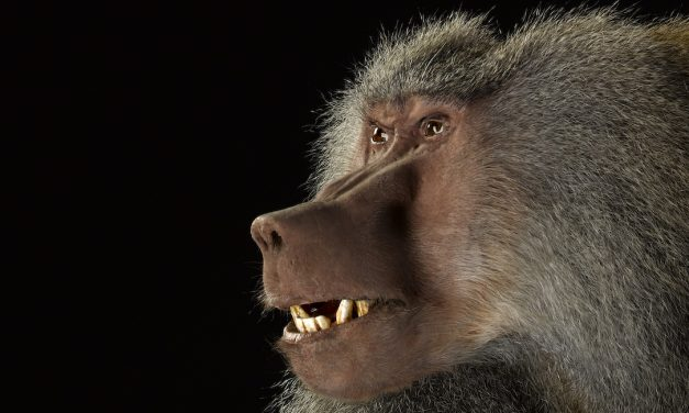 Tampereen museot 2020: Finlayson, Thomas Houseago, apinat, Joseph Alanen, käsilaukut…