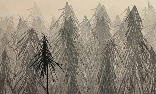Janne Laine vie Voipaalassa metsään, jonka elinvoimaisuus on syntynyt taiteiljakollegoiden vaikutuksesta