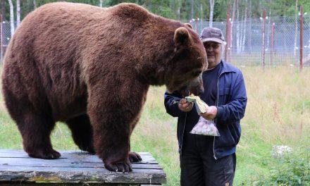 Parasta juuri nyt (12.2.2020): Juuso-karhu Tampere-talossa, Edelfelt Sinebrychoffilla, Kansallismuseo
