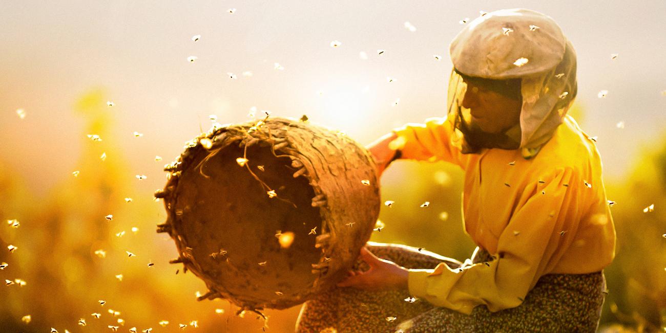 Hunajan maa riisuu katsojan aseista – sen pyyteetön kauneus rytmittää kerroksellista olemisen kuvausta