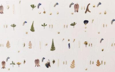 Taiteilijaksi kasvua esitellään kolmen gallerian voimin – yllättäen tilaisuus kokea myös kasvattajan näkökulma