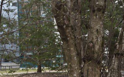 Parasta juuri nyt (28.4.2020): Kevät, Tihvinän ihmeet, Viimeinen muotokuva, Kaj Stenvall maalaa taulun