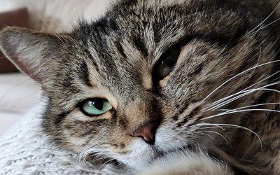 Pirskatin pinnallinen kirja ei tee oikeutta kissoille eikä heidän omistajilleen