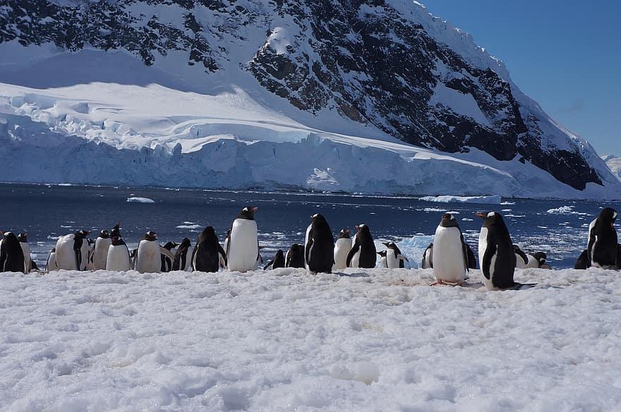 antarctica glacier penguin
