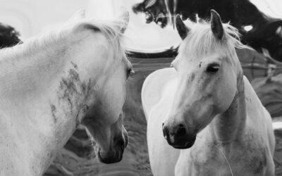 Parasta just nyt (19.8.2020): Millaista on olla eläin?, Kasino, Ankeriaan testamentti, Kaikki huutaa Dingo!