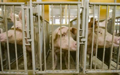 Parasta juuri nyt (26.3.2021): Kaikki irti eläimistä, WWF:n ruokakurssi, Raahe 1852–1856, Tampere Film Festival, Annetaan runo